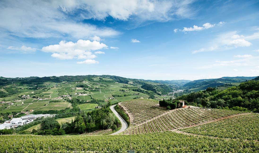 Experience Italy Travels in Langhe Monferrato